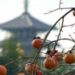 柿と法理寺
