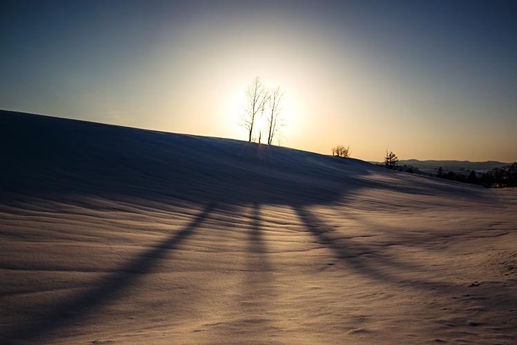 美麗の雪原と伸びる木の陰